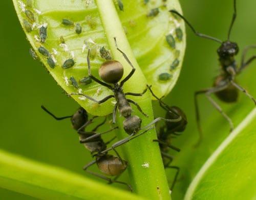 Hausmittel gegen Ameisen in Garten, Haus oder Küche