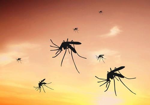 Hausmittel gegen Mücken - natürliche Mückenabwehr